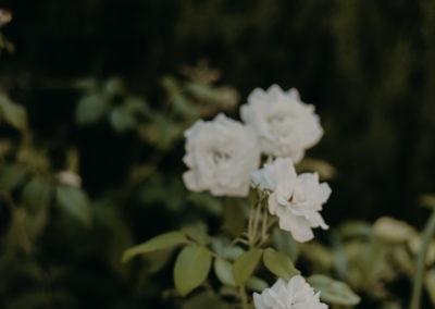 mariage-blanche-fleur-vaucluse-photographe-moody-maelys-izzo (4)
